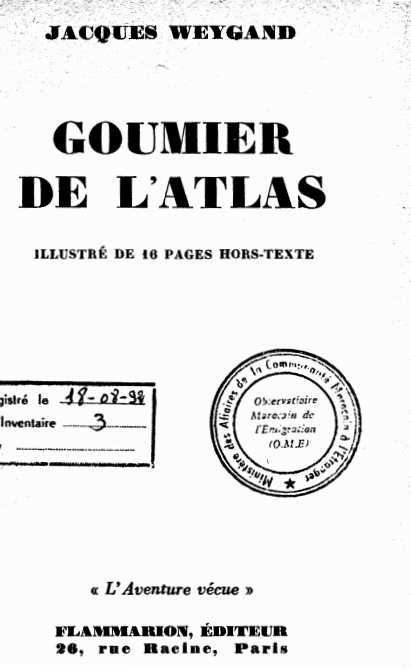 GOUMIER DE L'ATLAS